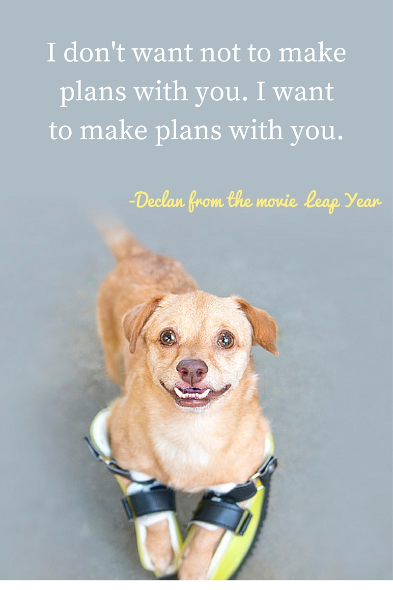 Leap Year quote about dogs by Majestic Monday