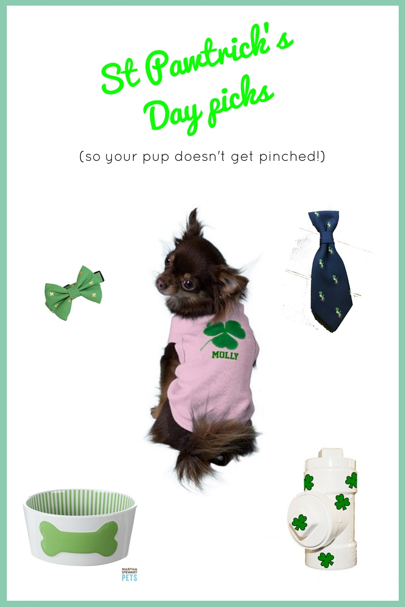 St Patrick's Day picks for your dog