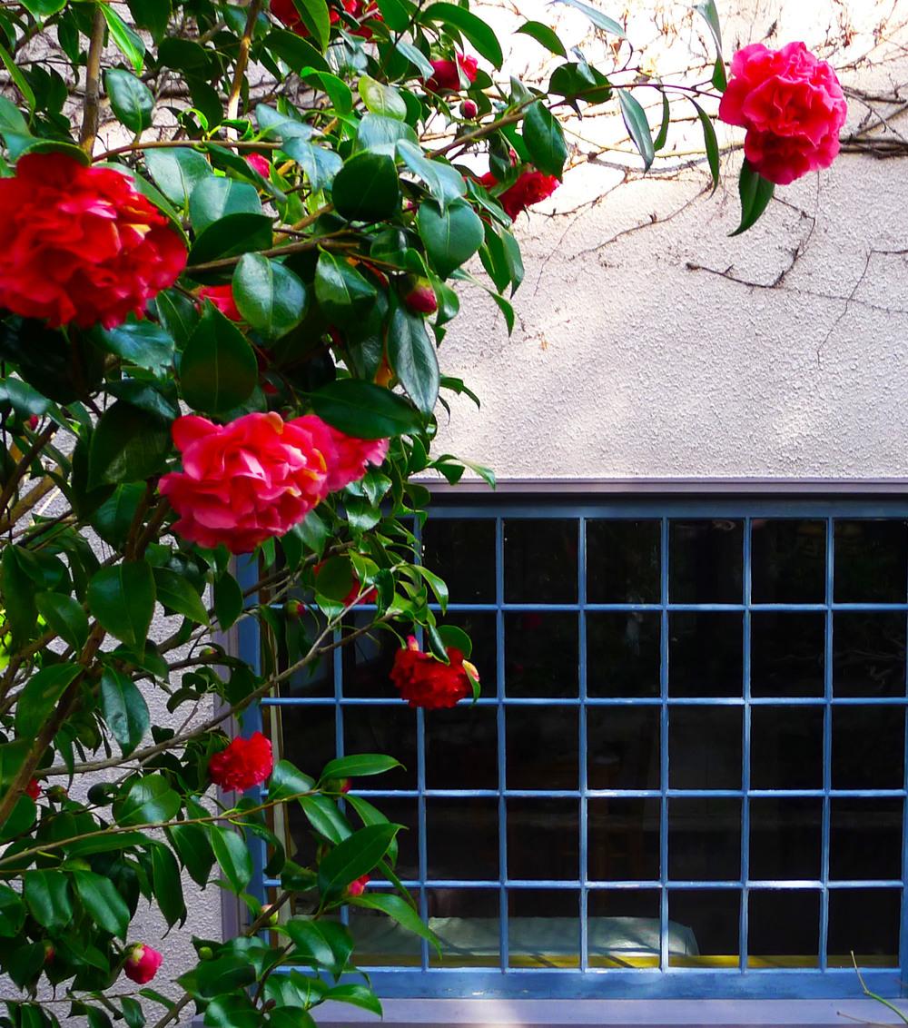 Sun-dappled blooms in springtime