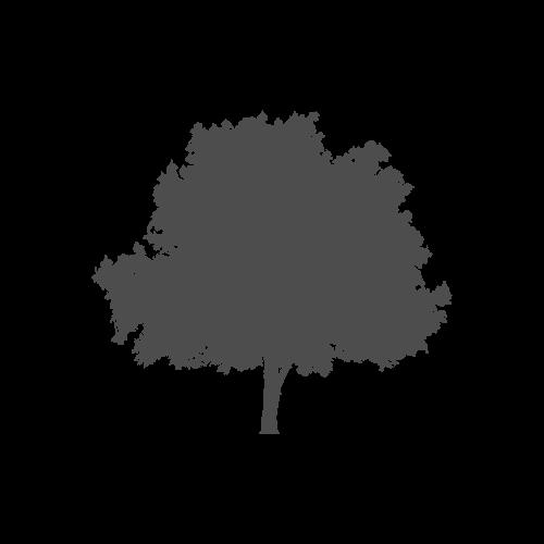 amp-logos-web-04.jpg