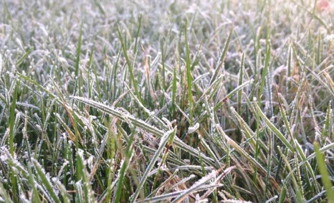 Frozen Grass.JPG