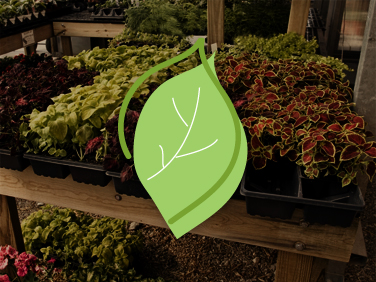 Green Life Nursery created by Simone Design + Develop