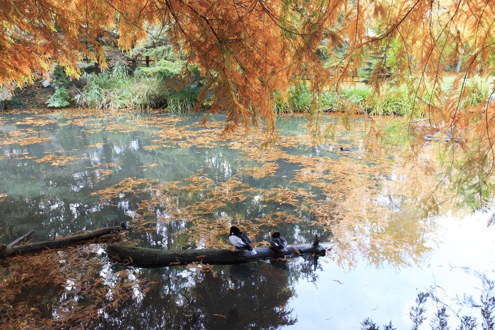 Eight Verses - the Wetlands 6.jpg