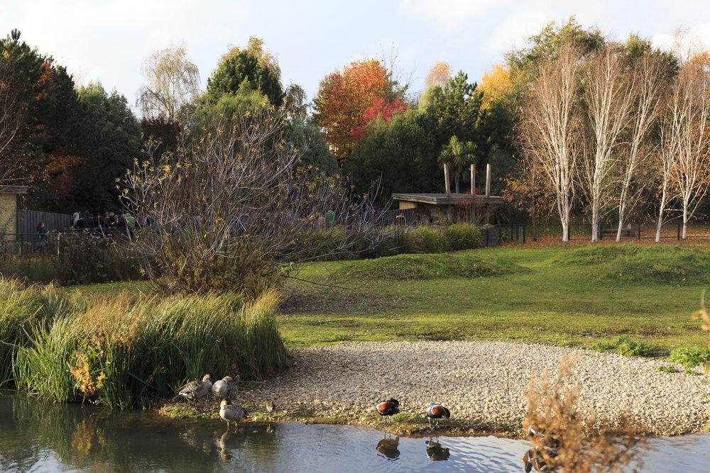 Eight Verses - the Wetlands 9.jpg