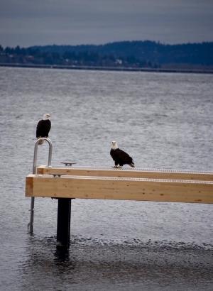 Eagles-dock-seaborn-seattle-500w.jpg