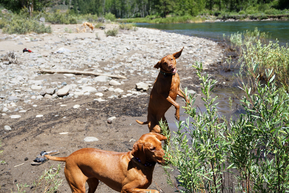 On Saturday, the day before the Carson City Epic Rides, we went to the river in Truckee to relax and cool down. It was over 100 degrees all weekend, so chilling in the cold river felt very refreshing. Plus, it's always fun watching Rubi and Lola run around!