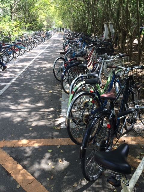 Bikes at Kyoto University