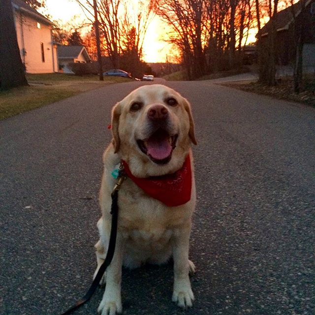 On a night like this, you can count an outdoor dog walk as your workout 🐕 ☀️👍🏽#springisintheair #dogwalk #dogrun #todaysworkout