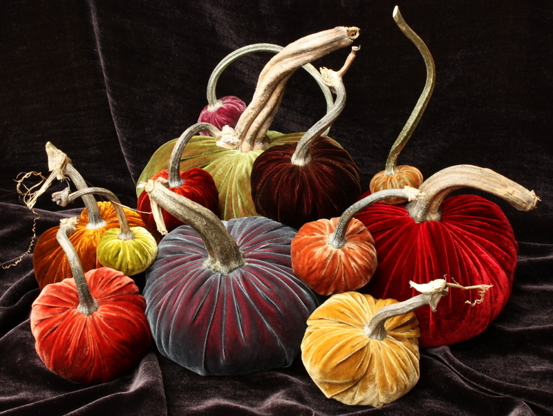 purple group velvet pumpkins hot skwash may.jpg