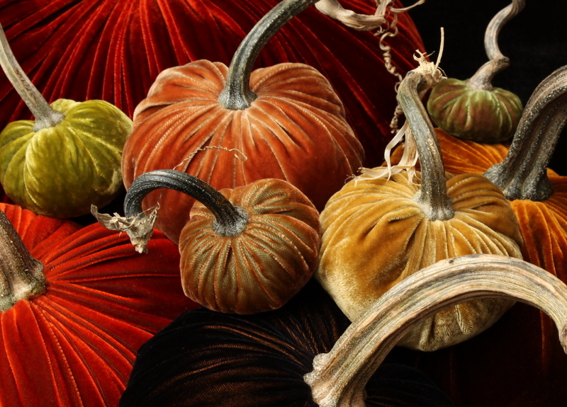 close group velvet pumpkins hot skwash may.jpg