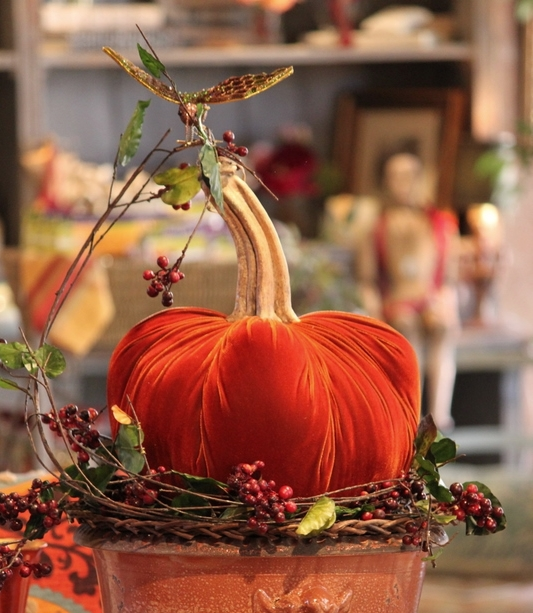 hot skwash velvet pumpkins jumbo apricot black hummingbird.JPG