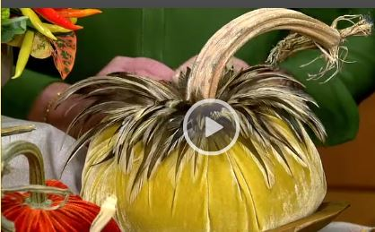 HOT-SKWASH-FEATHER-VELVET-PUMPKINS