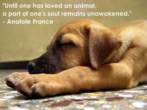 cute-puppy-dog-2.jpg