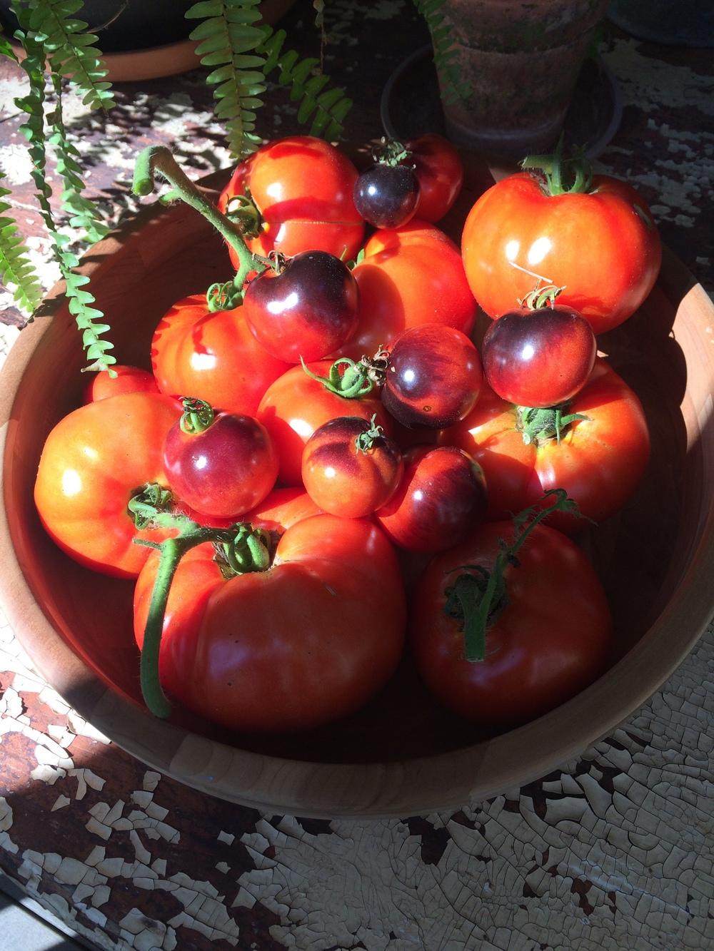 tomatobowl.JPG