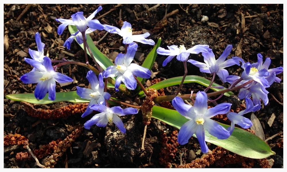 spring-1279438_1920-2.jpg