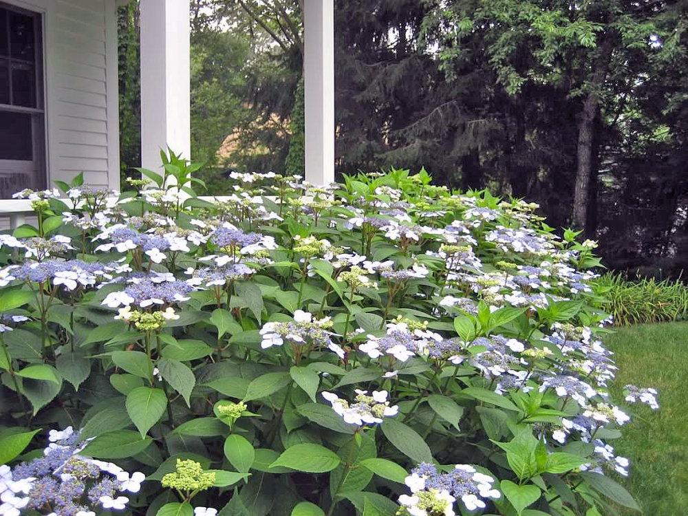 A garden in Cummaquid. View gallery (12)