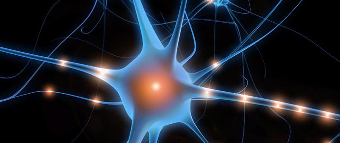 Neuron 1.png