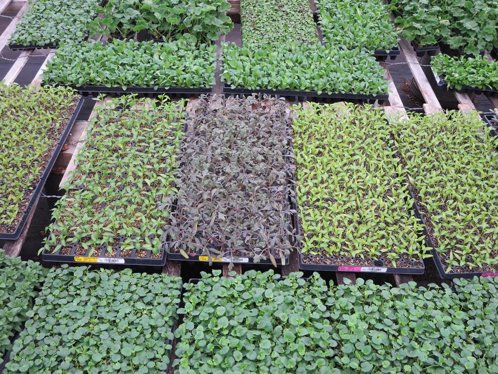 Greenhouse 2014 008.jpg