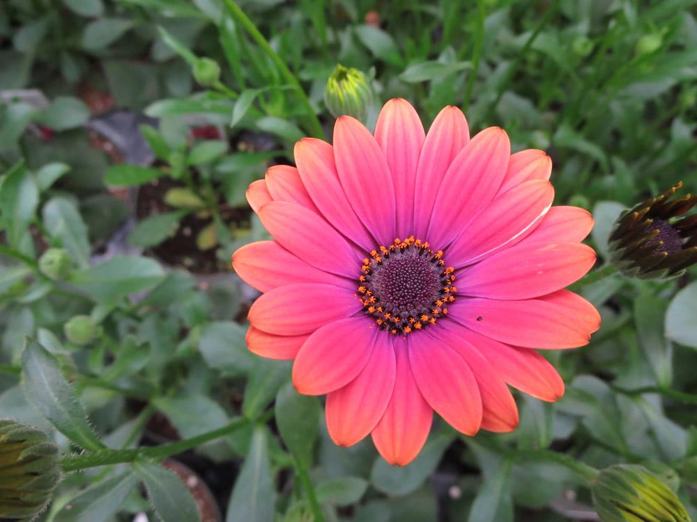 Robert Linck and flowers 007.jpg