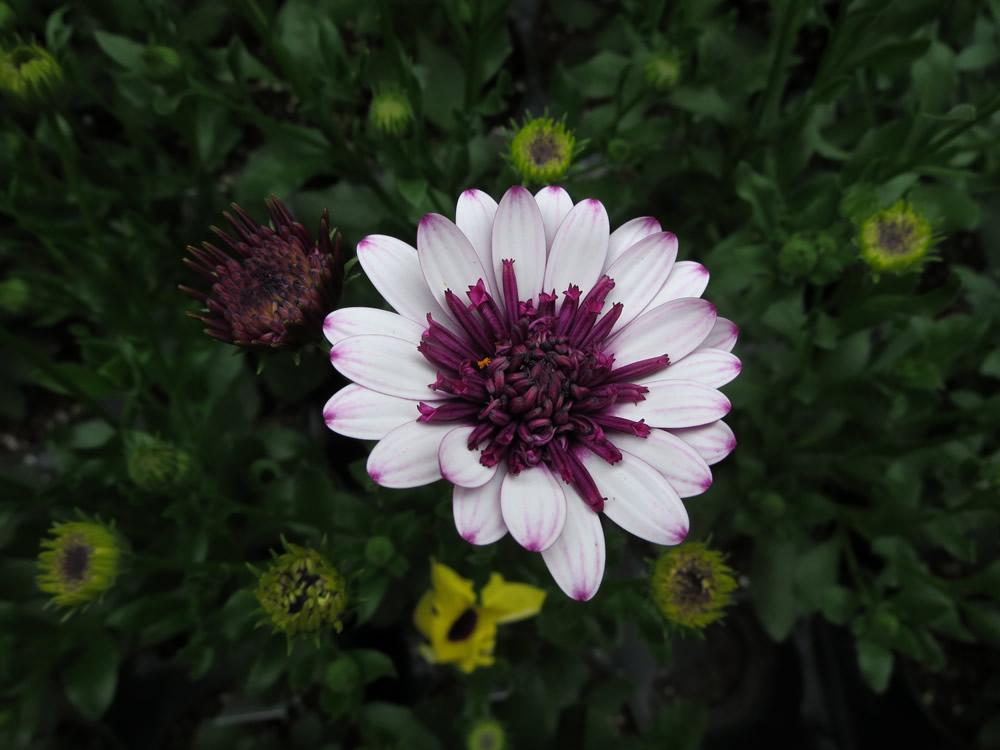 Robert Linck and flowers 006.jpg