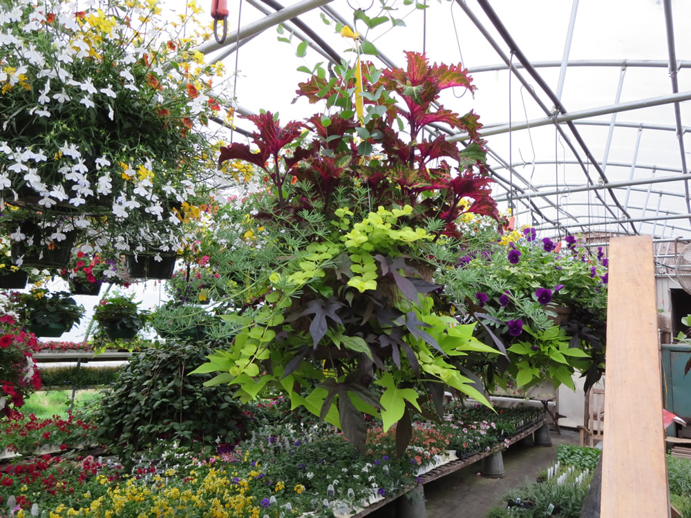 Robert Linck and flowers 003.jpg