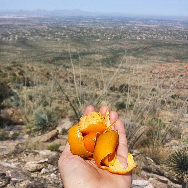 Carried these orange peels all way down from the Tanque Verde Ridge Trail to throw them in a bucket! Another beautiful day in Tucson!  #tucson #arizona #scrapsonscraps #hiking #compostaz