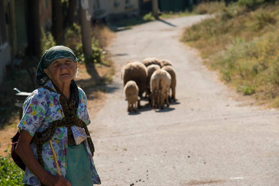 """Granny"" herding her sheep"