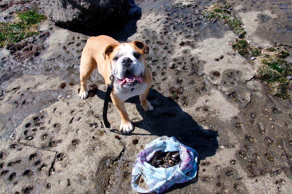 smallswell-beach-bulldog-mussels