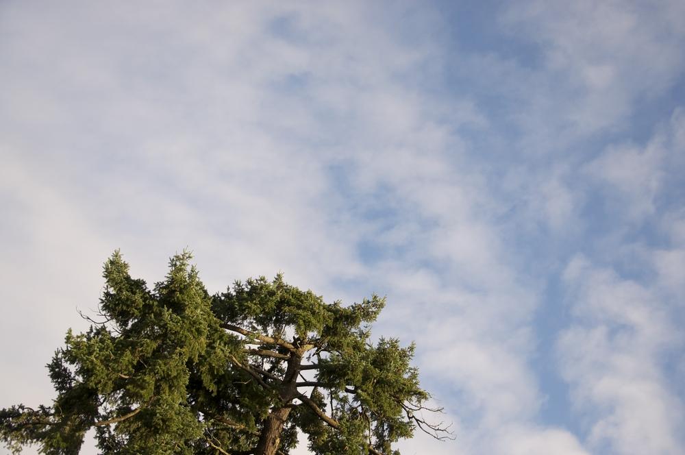 smallswell-tree-victoria