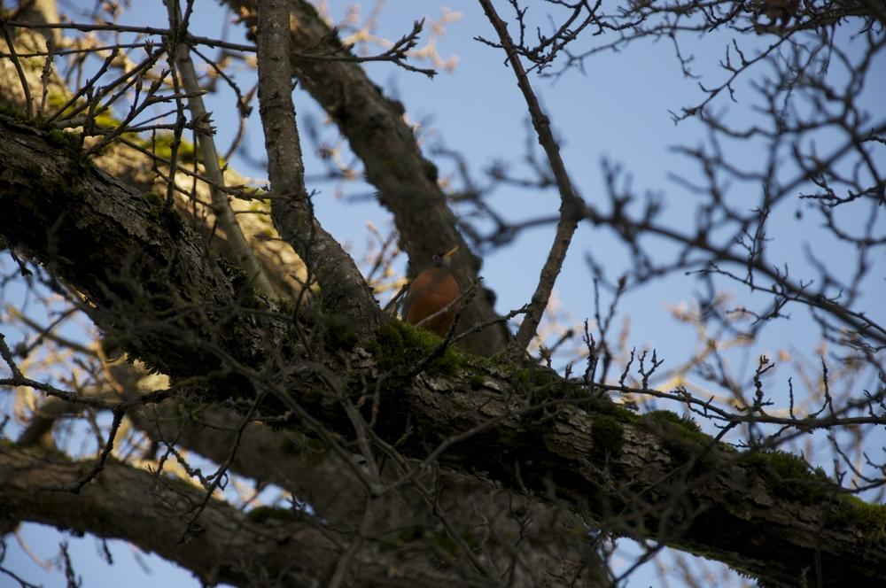 smallswell-robin-victoria