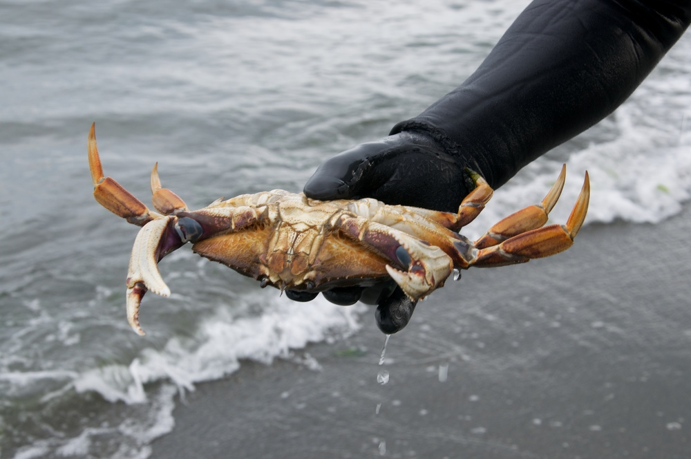 smallswell-diving-for-dungeness-crab