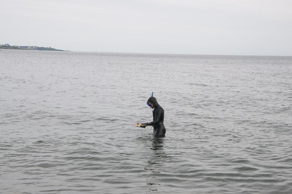 smallswell-lagoon-shore-diving