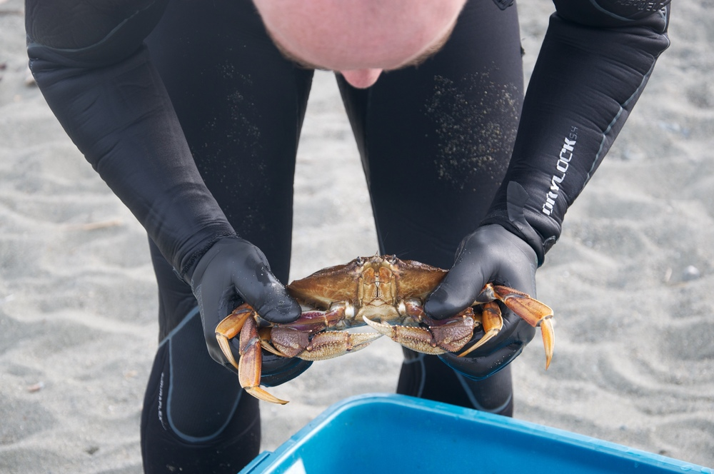 smallswell-dungeness-crab-catch