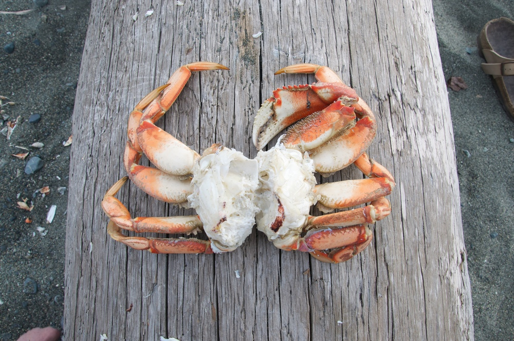 smallswell-dungeness-crab-feast