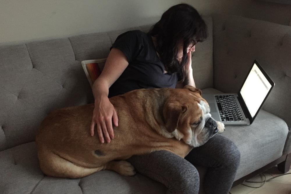smallswell-smallspace-couch-work-bulldog