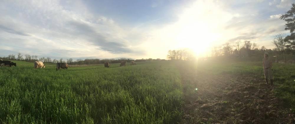 grazing15.jpg