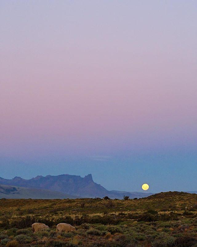 🐑🌕🐑🌕 #torresdelpaine #patagonia #z6