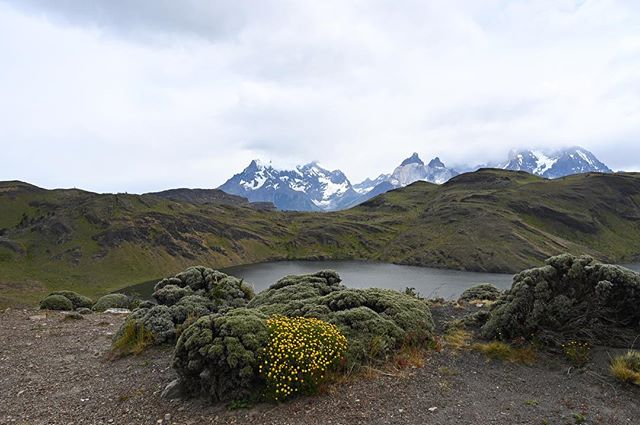 Guanacos, Gauchos, and glaciers. #torresdelpaine #patagonia #z6 #hoteltierrapatagonia