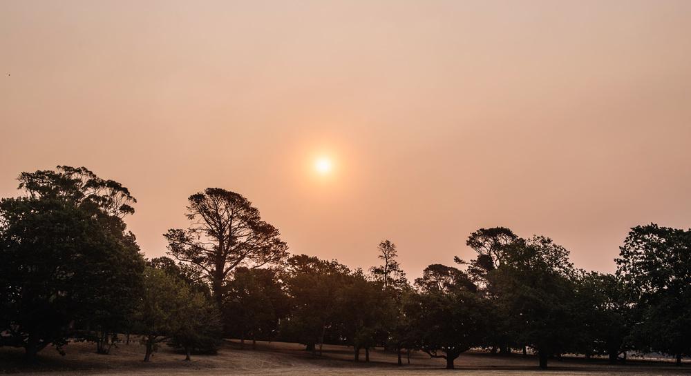 Amazing smoke haze over Entally Estate