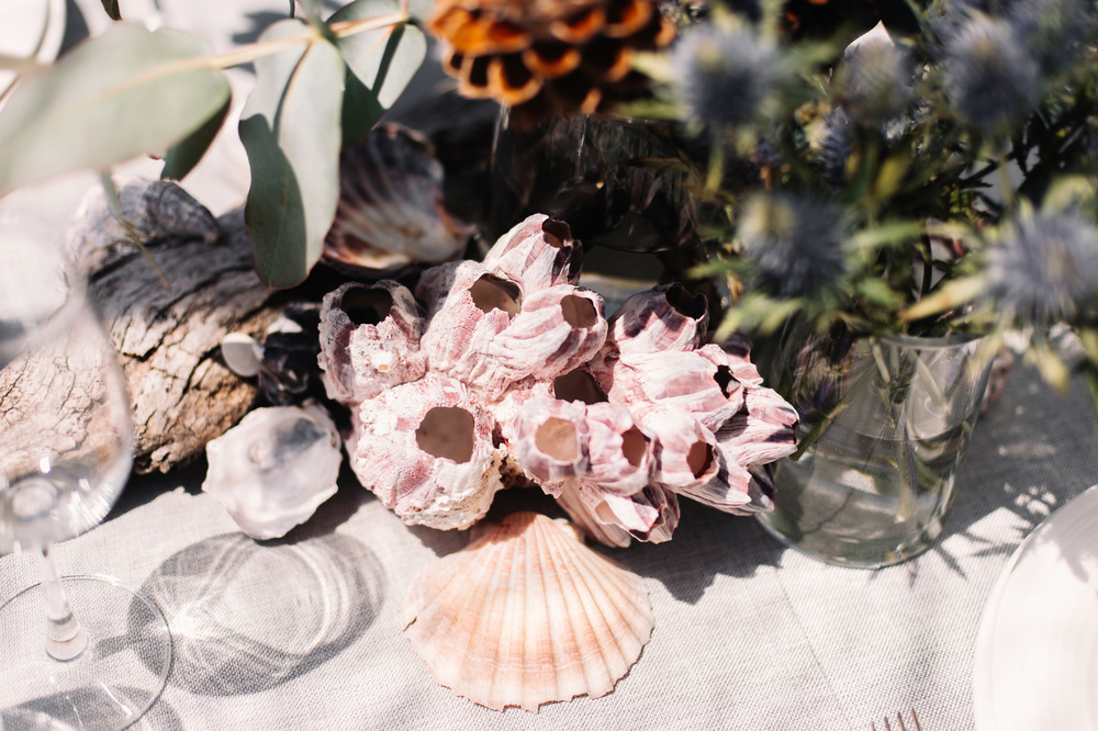 Barnacles and other coastal elements for the long table