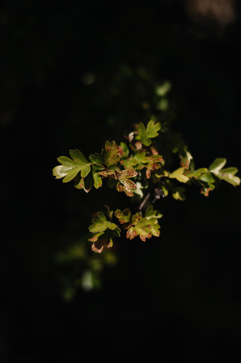 Foliage at Tasmanian website