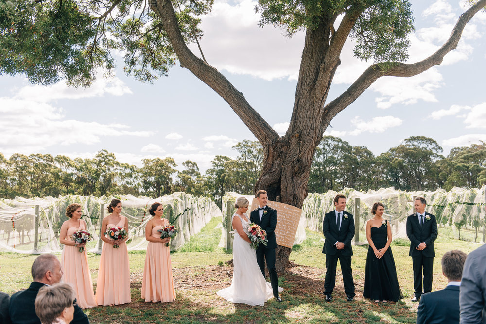 Goaty Hill wedding under the blackwood tree