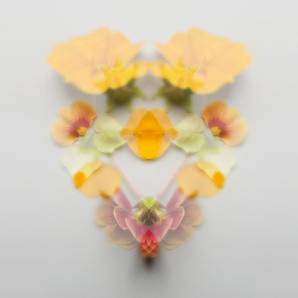 Rorschachblumen, mehr Infos:  Blog