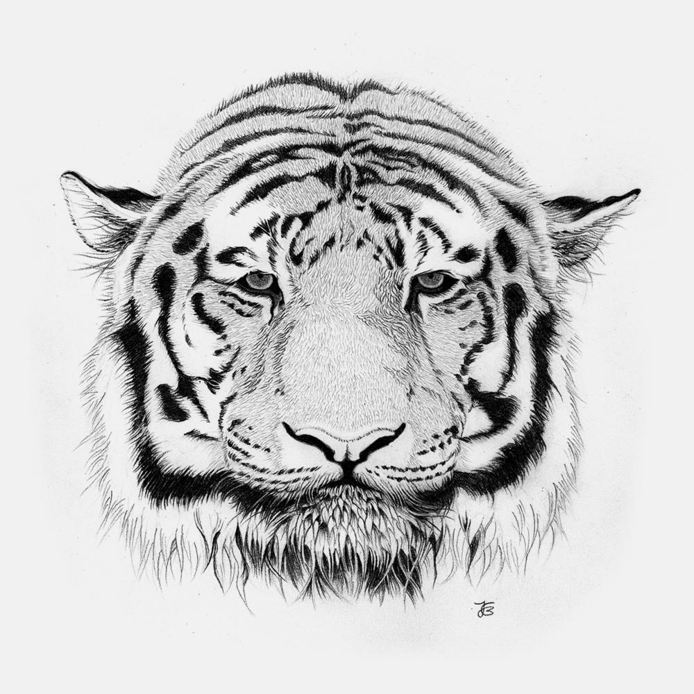 Tiger_Grey.jpg