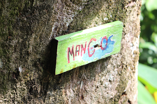 Image taken at Mango Ridge, Port Antonio, Jamaica. Image belongs to No Grace Kelly.