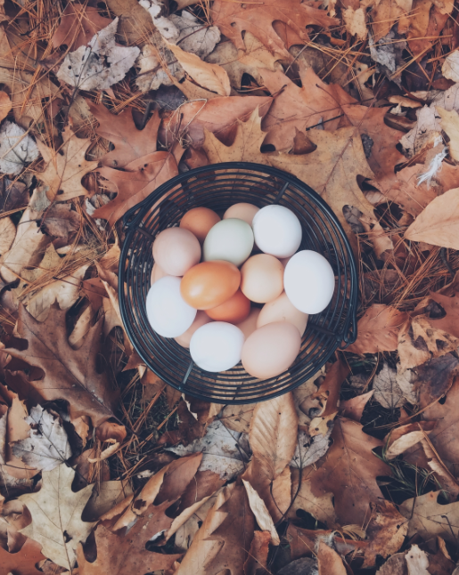 Eggs  -we don't need 'em! Image via Unsplash.com
