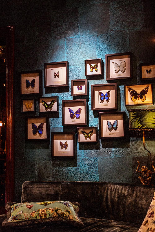 hotel butterflies  (1 of 1).jpg