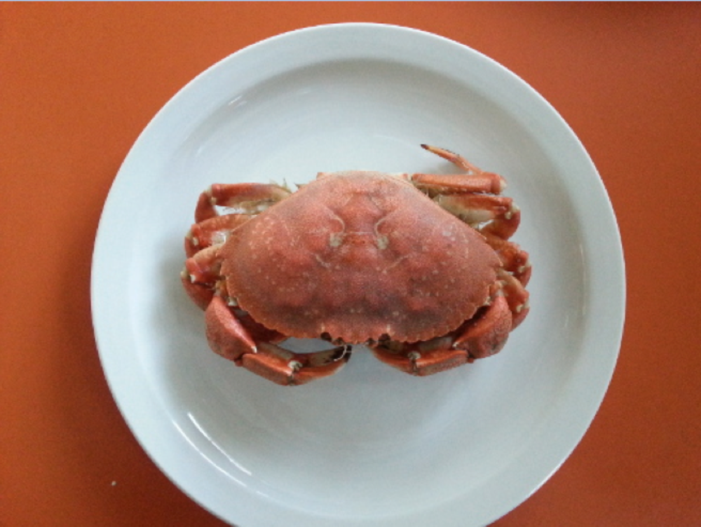 rock crab 3.png