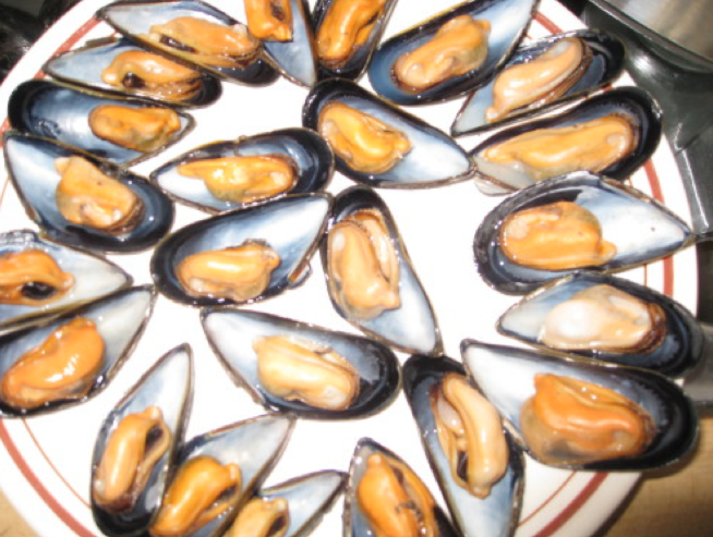 blue mussels.png