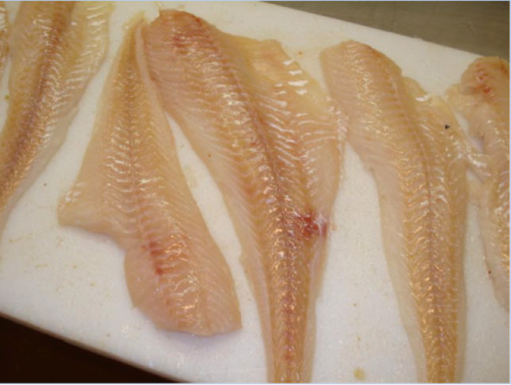 cod fillets.png